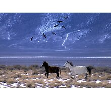 Through The Wilderness  Photographic Print
