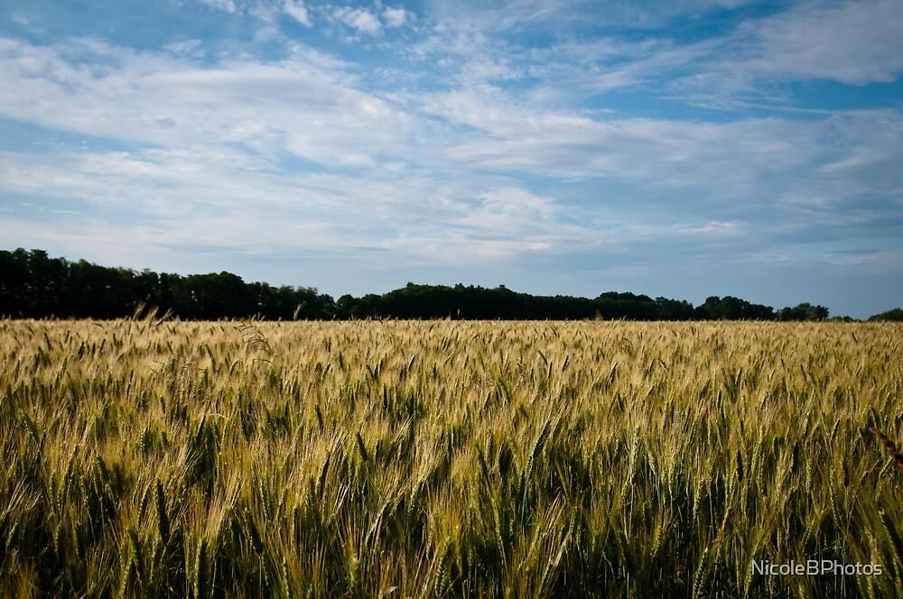 Ready to harvest by NicoleBPhotos