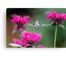 Hummingbird Superhero! Canvas Print
