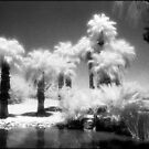 Infrared palms by Mike Lewis