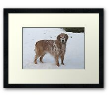 Snowy Winnie Dog Framed Print