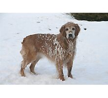 Snowy Winnie Dog Photographic Print