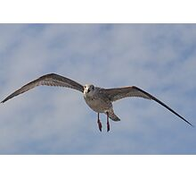Look at me. l can fly -  Lyme Dorset UK Photographic Print