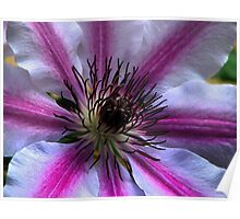 Clematis Poster