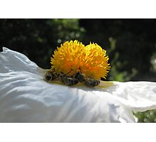 Bees at Work Photographic Print
