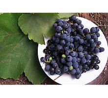 Concord Grapes Photographic Print