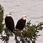Northwest Eagles, Tacoma Washington by Leigh Stone