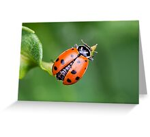 Ladybug, Ladybug Fly Away Home Greeting Card
