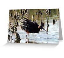 Ruffle by feathers Greeting Card