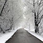 Winter Wonderland by bozette
