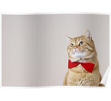 Red Cat sitting and looking up with a red ribbon,bow isolated on grey background. Poster