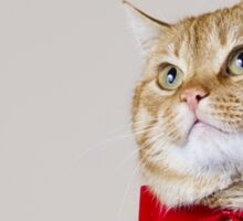 Red Cat sitting and looking up with a red ribbon,bow isolated on grey background. Sticker
