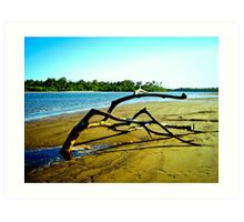 Sand Tree, Flying Fish Point, Nth Queensland Art Print