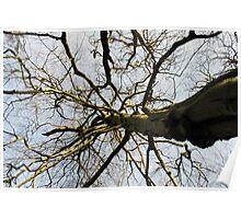 vertigo tree Poster