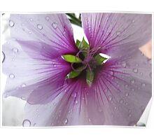 Rain on Petals Poster