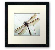 Huge Dragonfly Framed Print