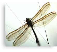 Huge Dragonfly Canvas Print