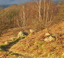 Borrowdale Path by Jacqueline Wilkinson