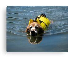 Winnie Swimming - O'Haver Lake, Colorado Canvas Print