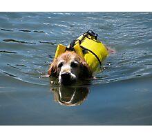 Winnie Swimming - O'Haver Lake, Colorado Photographic Print