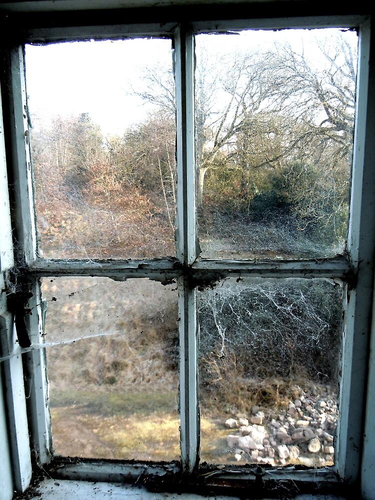 Window on the world ~ Pool Park Asylum by Josephine Pugh