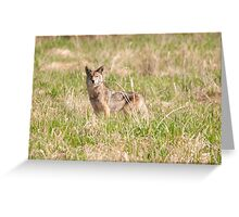 Coyote Takes a Stance Greeting Card