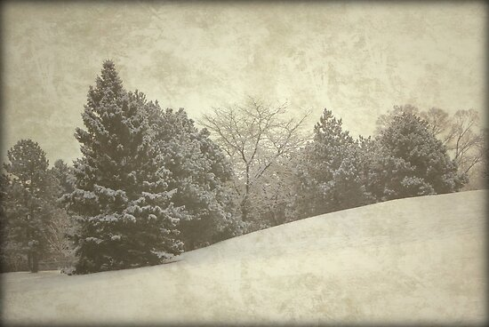 Against the wind and the cold by ©Maria Medeiros