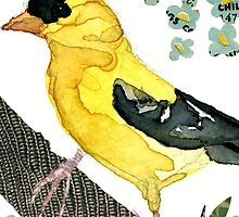 Spinus Tristis (American Goldfinch #2) by Carol Kroll