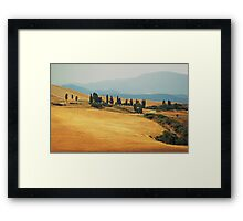 Cypress Trees In Italy Framed Print
