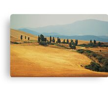 Cypress Trees In Italy Canvas Print
