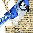 Cyanocitta  Cristata #3 (Blue Jay #3) by Carol Kroll