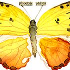 Phoebis philea (Orange Barred Sulphur) by Carol Kroll