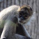 Monkey  by bozette