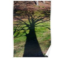Oak tree shadow Poster