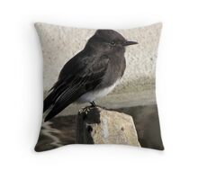 Black Phoebe ~ Tyrant Flycatcher Throw Pillow