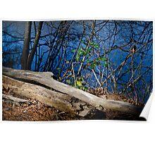 Deadwood By Lake Wheeler Poster