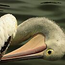Pelican profile by bobby1