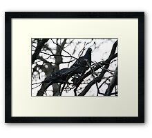 Perched up in a tree Framed Print