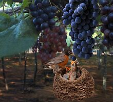 VINEYARD & ROBIN FEEDING BABIES GRAPES-PILLOWS-TOTE BAG-JOURNAL-NOTE BOOK- SCARF-ECT.. by ✿✿ Bonita ✿✿ ђєℓℓσ