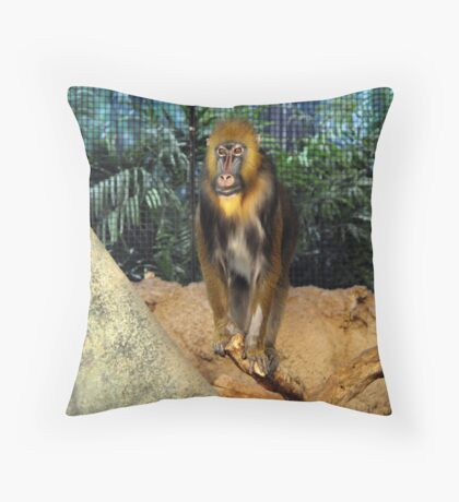 Mandrill At the Zoo Throw Pillow