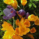 Spring.... by supernan