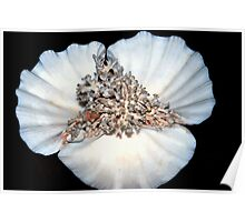 Coral on clamshell Poster
