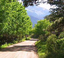 Colorado Dirt Road by NatureGreeting Cards ©ccwri