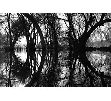 Flooded Trees, Henley. Photographic Print