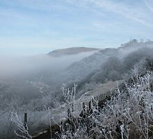 Freezing fog in Clydach Gorge by Jane Corey