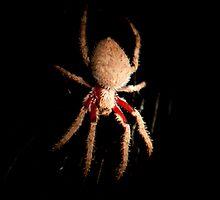 Orb Spider by KellieJayne