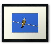 Western Kingbird ~ Adult Framed Print