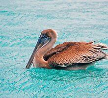 Ruffle my feathers by Leon Heyns