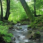 Woodland stream in summer by Jane Corey