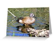Blue-winged Teal ~ Male Greeting Card